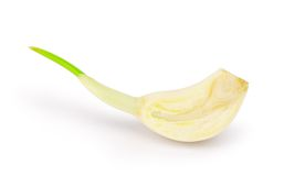 Section of garlic Stock Photography