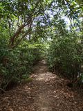 Rhododendron Tunnel Hiking Trail along Dan River. A section of a hiking trail along the Dan River is surrounded by rhododendrons forming a tunnel royalty free stock images