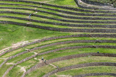 A section of the incredible ancient circles of Moray in Peru Stock Photo