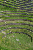 A section of the incredible ancient circles of Moray in Peru. Royalty Free Stock Photos