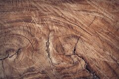 Section of large diameter sawn through tree Stock Photo