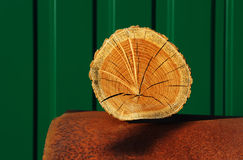 Section of log Stock Photography