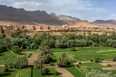 A section of the lush Tinerhir oasis in Morocco. A section of the lush Tinerhir oasis in Morocco where fruit and vegetables are grown. Tinerhir is a city in the Stock Image