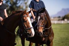 Section médiane des amis s'asseyant sur des chevaux à la grange Photos libres de droits