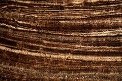 Section mince d'une stalagmite Image libre de droits