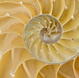 Section of nautilus shell Royalty Free Stock Photography