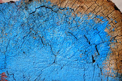 Section of an old tree painting Royalty Free Stock Images