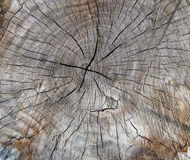 Section of an old tree trunk with wood cracks. Section of an old cut tree trunk with radial cracks. The tree rings are visible over the brown wood color stock images