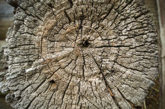 Old Wood Tree Rings Texture  Stock Photo
