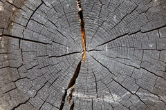 Section of old tree Royalty Free Stock Images