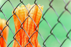 Chainlink Fence and Piece of Orange Tarp Royalty Free Stock Images