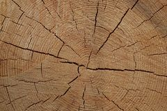 Section of pine logs Stock Image