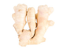 Fresh root ginger Stock Photography