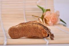 Section-The rhizome section of Ganoderma lucidum Stock Image