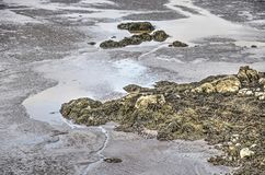 Puddles on the beach. Section of a sandy beach with puddles, rocks and seaweed stock photography