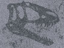Skull of tyrannosaur in flat rock royalty free stock images