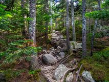 Exposed Rocky Trail Through Dense Woods Stock Photos