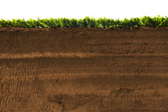 Section transversale d'herbe d'isolement sur le blanc Photographie stock libre de droits