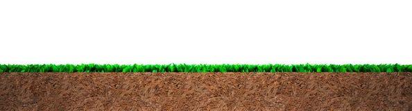 Section transversale d'herbe et de sol image libre de droits
