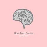 Section transversale de cerveau illustration de vecteur