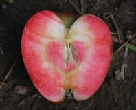 Section transversale de l'amour Apple rouge Photos stock