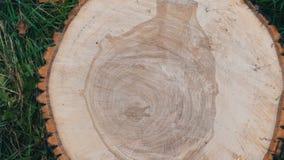 Section transversale de l'arbre Modèle peu commun sur la coupe d'un arbre sous forme de coeur humain ou de vase clips vidéos
