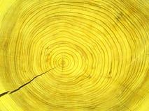 Section transversale de séquoia Image libre de droits