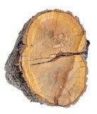 Section transversale de tronc d'arbre Image stock