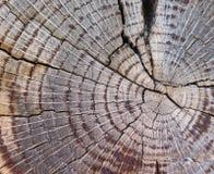 section transversale de vieux tronc d'arbre Photographie stock libre de droits