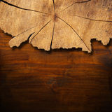 Section of Tree Trunk  - Background Stock Image