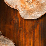 Section of Tree Trunk  - Background Royalty Free Stock Photography
