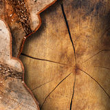 Section of Tree Trunk  - Background Stock Images