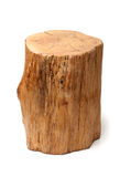 Section of Tree Trunk Royalty Free Stock Photo