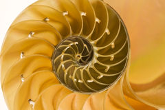 Sectional cut of a nautilus shell Stock Photography