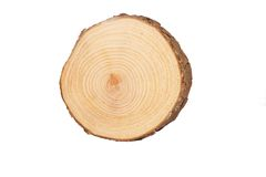 Sectional view of tree Stock Photo