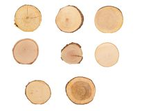 Sectional view of tree Stock Photography