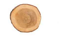 Sectional view of tree Royalty Free Stock Images