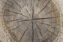 Sectioneel hout Royalty-vrije Stock Fotografie