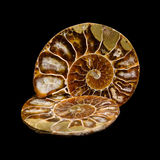 Sections d'ammonite Photos stock