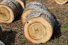 Sections of tree trunk. Cut or sawed sections of tree trunk Stock Photo