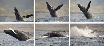 Secuencia de la foto de la ballena Fotos de archivo
