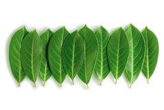 Secuencia de las hojas Foto de archivo libre de regalías