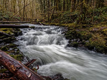 Secuencia de precipitación en bosque imagen de archivo