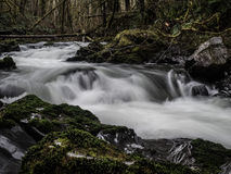 Secuencia de precipitación en bosque fotografía de archivo libre de regalías