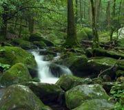 Secuencia del bosque Fotos de archivo libres de regalías