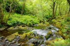 Secuencia del bosque Imagen de archivo libre de regalías
