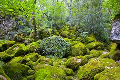 Secuencia del bosque Fotografía de archivo