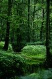 Secuencia 2 del bosque imagen de archivo
