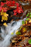 Secuencia del bosque del otoño (vertical) Foto de archivo