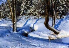 Secuencia del invierno imágenes de archivo libres de regalías